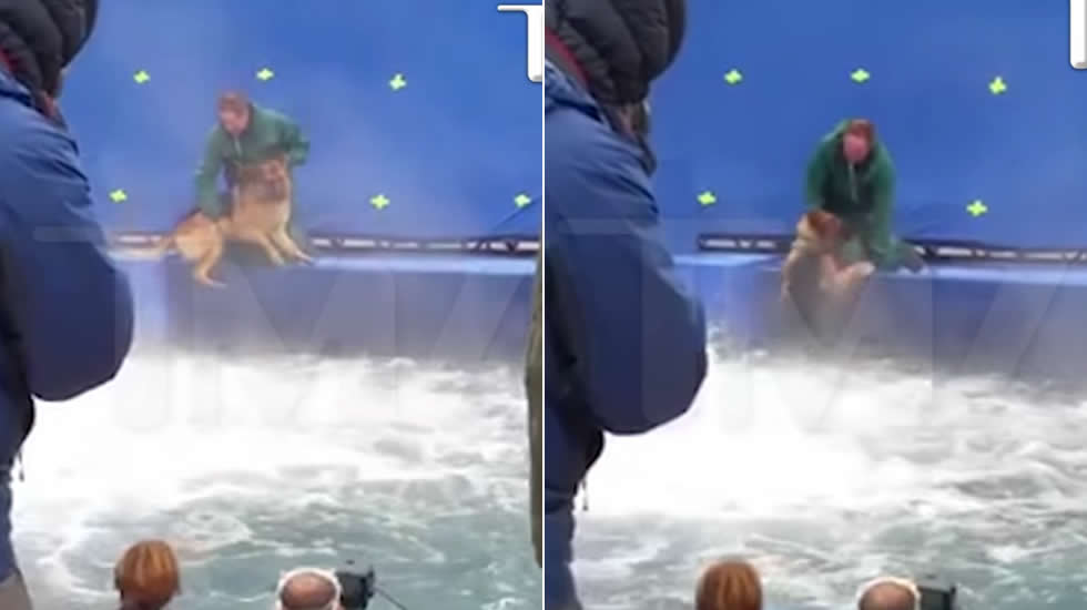 Denuncian a la pel cula el prop sito de un perro por for La piscina pelicula